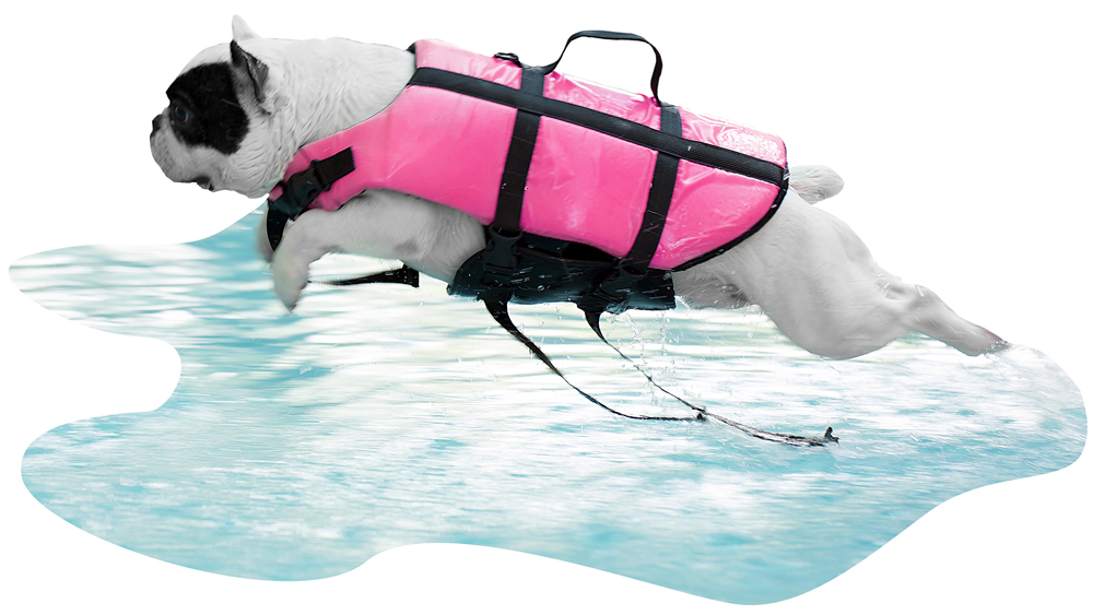 A dog going for a swim