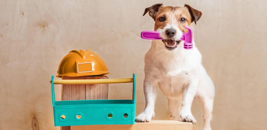 dog daycare boarding