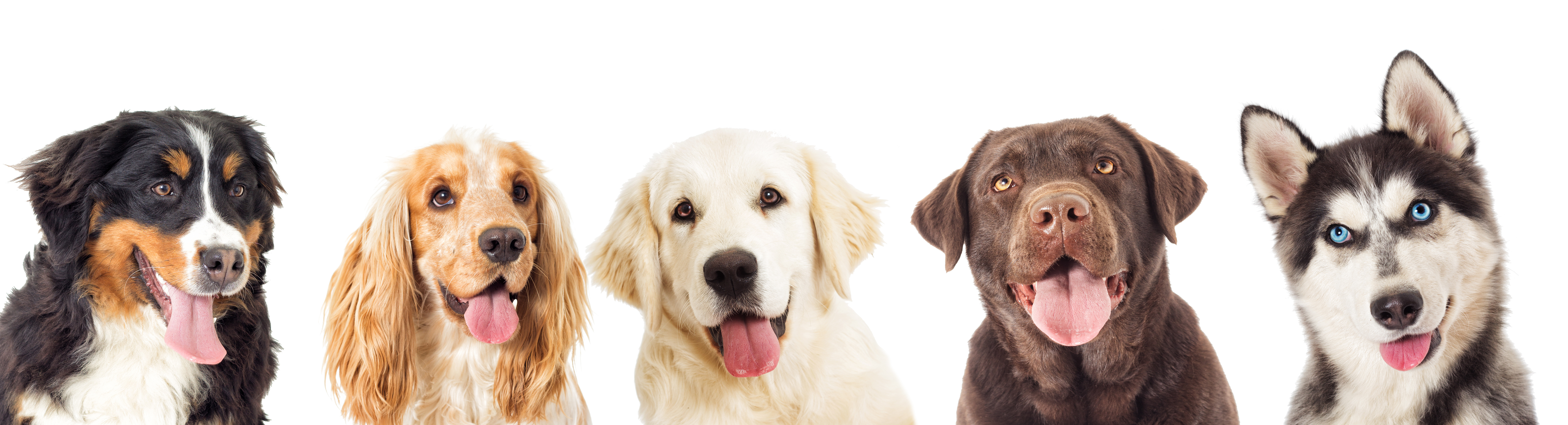 Different dog breeds in a row